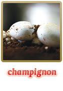 Variedade Champignon
