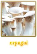 Variedade Eryngui