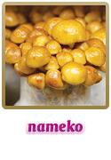 Variedade Nameko