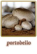 Variedade Portobello