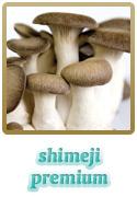 Variedade Shimeji Premium