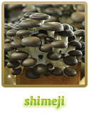 Variedade Shimeji